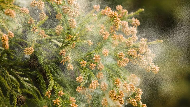 花粉症が辛い…「そうだ割り箸を使おう!」杉の間伐と林業衰退のお話